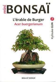 Mini Bonsaï - L´érable de Burger